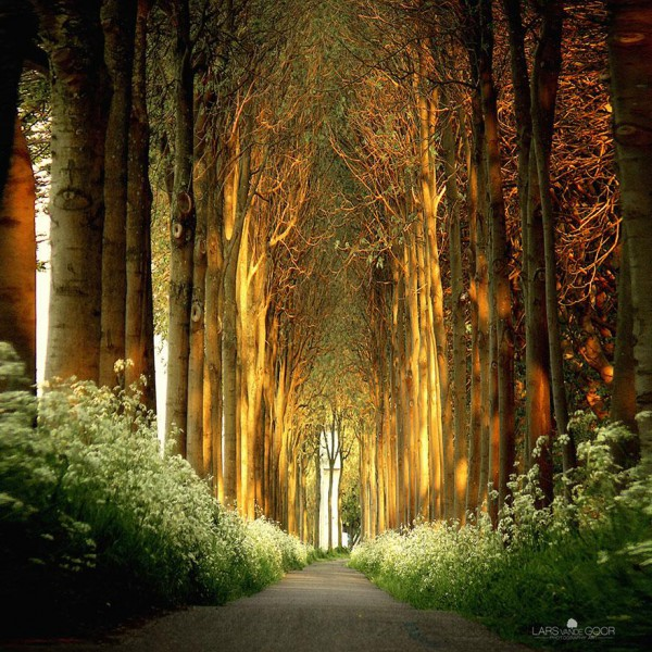 amazing-tree-tunnels-7