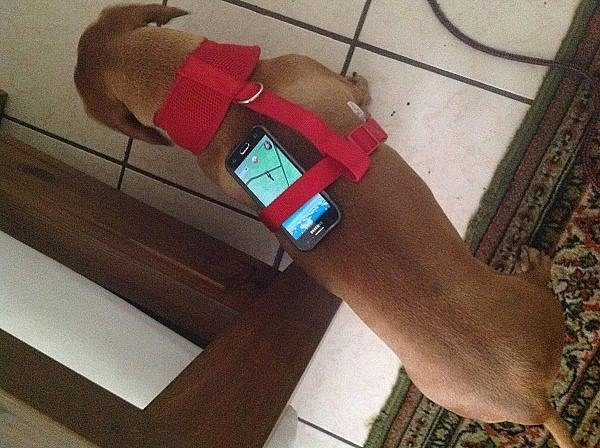 whos-a-good-pokmon-trainer-your-dog-is