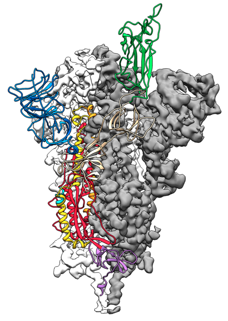 spike-protein-structure