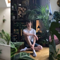 Jungle Boy ukhouseplants