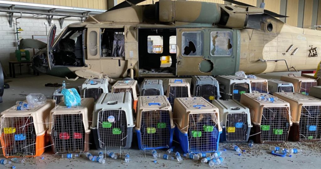 US Military Dogs, Afghanistan